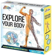 Explore Your Body Skeleton & Muscle Model