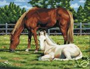 A3 Canvas Painting By Numbers Kit - Horse In Field Pcl2