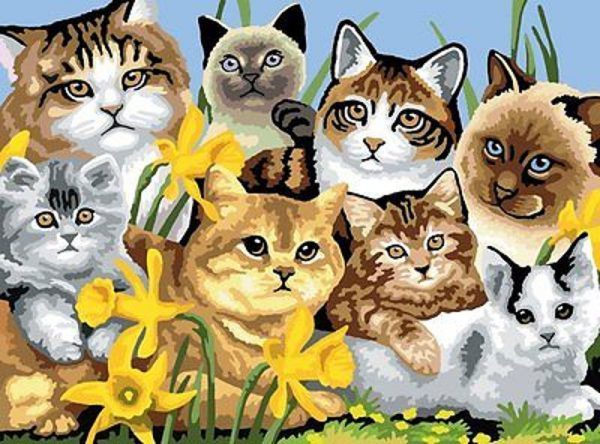 A3 Large Painting By Numbers Kit - Cats Montage Pjl6