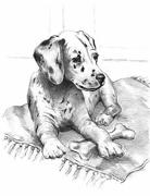 A4 Sketching Made Easy Drawing Kit - Dalmatian Puppy Skbn21